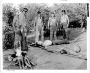 Western Movies - Les Comanches passent à l'attaque (The Oregon trail) 1959 - Documents et Affiches